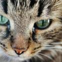 кастрированный красивый кот