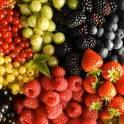 Сбор ягоды садовой