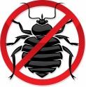 Уничтожение КЛОПОВ, ТАРАКАНОВ, МУРАВЬЕВ и др.насекомых