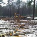 Удаление аварийных деревьев частями