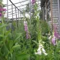Продается земельный участок в 4-м садоводстве