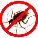 Уничтожение (дезинсекция) тараканов, клопов. Усолье-Сибирское