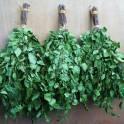 Веники для бани и сауны дуб, липа, береза