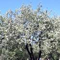 Обрезка плодовых деревьев в Красноармейске и округе