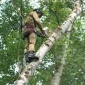 Спил деревьев, обрезка деревьев в Чехове