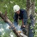 Спил деревьев, обрезка деревьев в Ступино