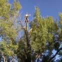 Удаление аварийных и опасных деревьев в Бронницах