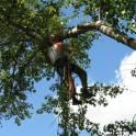 Удаление аварийных и опасных деревьев в Кашире