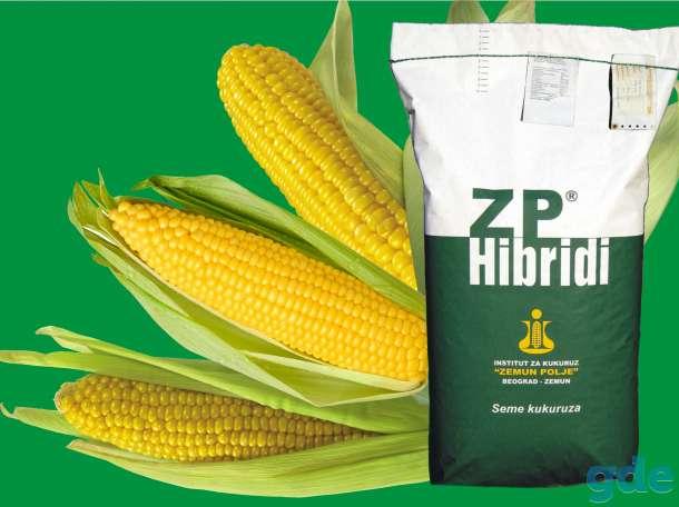 Семена гибридов кукурузы ЗПСК, фотография 1