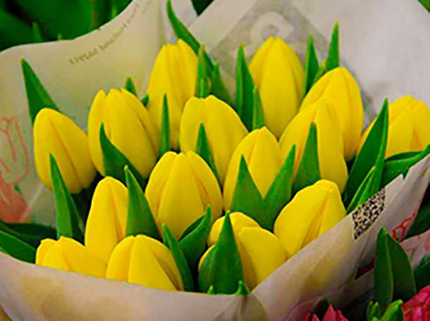 Голландские тюльпаны оптом 2017, фотография 3