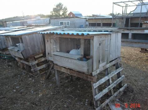 Продается мини-ферма со своим пастбищем и жилым домом в 250 км от Москвы, фотография 10