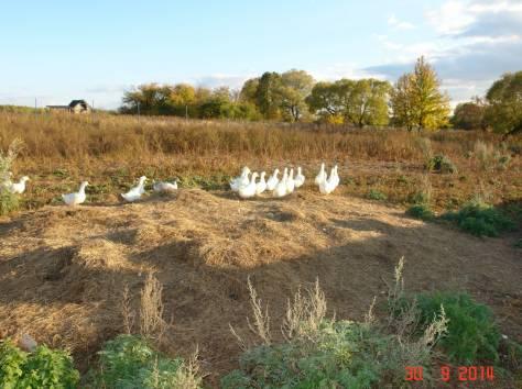 Продается мини-ферма со своим пастбищем и жилым домом в 250 км от Москвы, фотография 12
