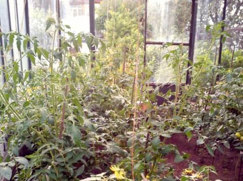 сад в Кыштыме на острове Бычном, фотография 1