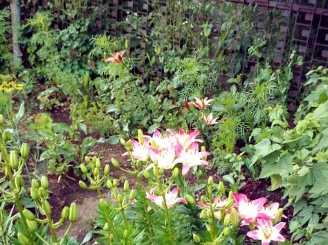 сад в Кыштыме на острове Бычном, фотография 6