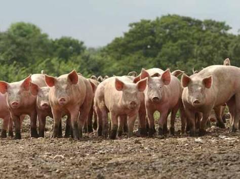 Продажа прибыльного сельхозпредприятия в Южном фо., фотография 4