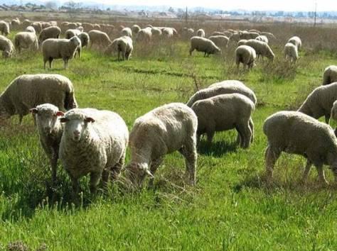 Продажа прибыльного сельхозпредприятия в Южном фо., фотография 5