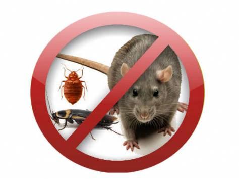 Уничтожение насекомых / грызунов - Анапа, фотография 1