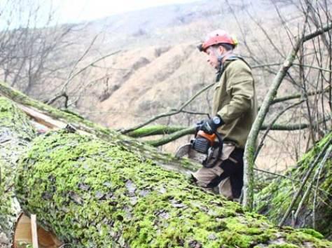 Удаление, спил, обрезка деревьев в Балабаново, фотография 1