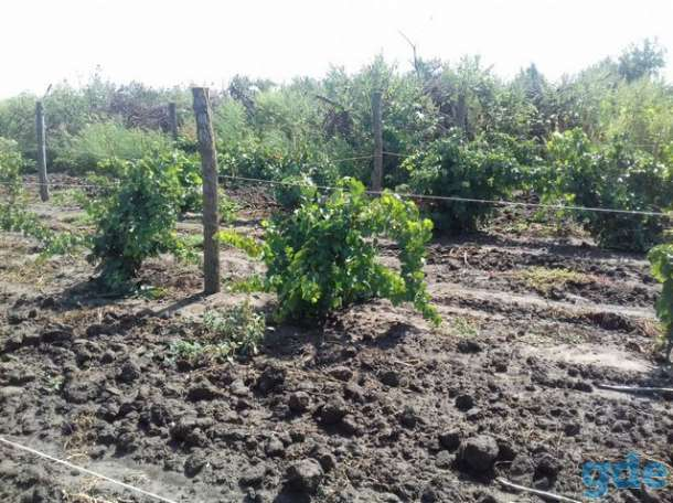 В продаже земельный участок с плодоносящим яблоневым садом на 20 га, фотография 4