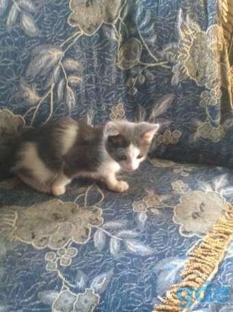 Котята, фотография 1