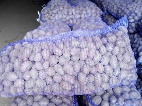 Продаем картофель продовольственный и семенной, фотография 3