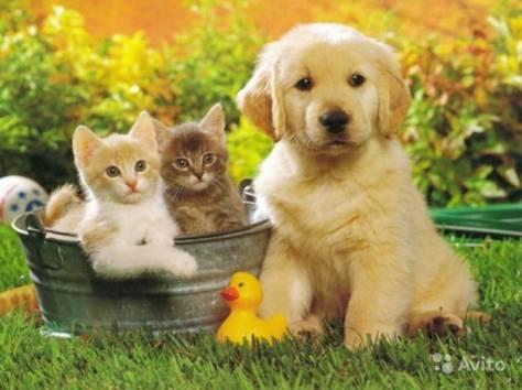Передержка любых животных, фотография 1