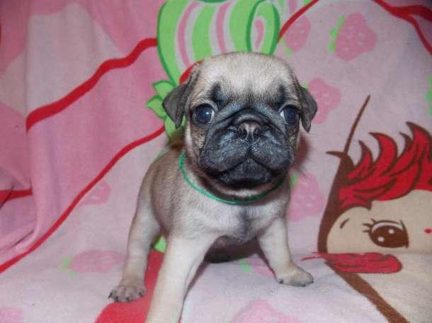 продам щенков, фотография 1