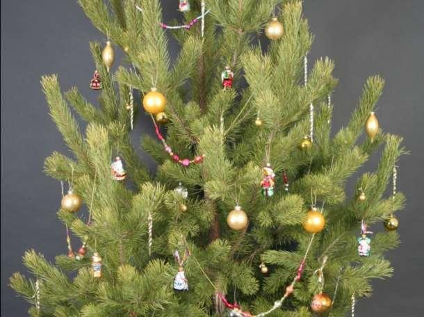 Новогодние деревья, фотография 2