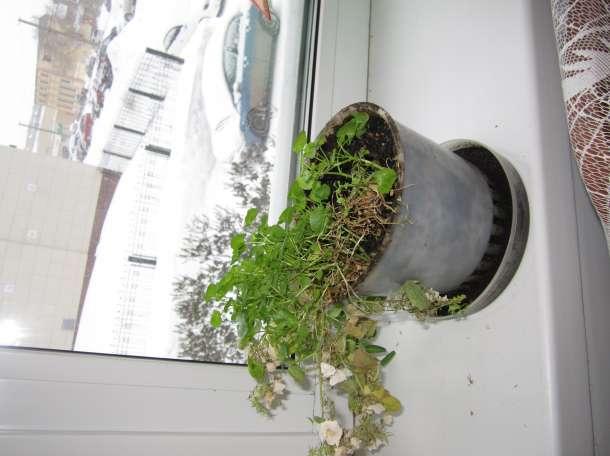 Красивые домашние растения для дома и офиса, фотография 12