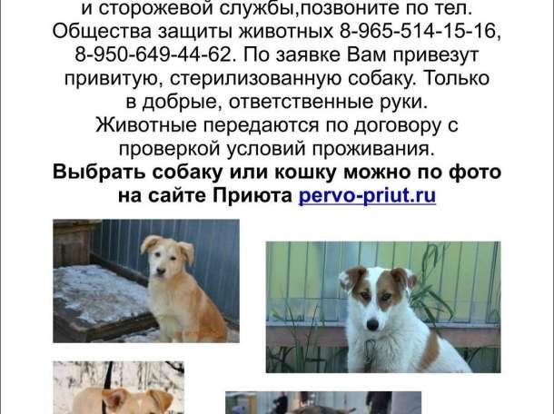 Щенок или собака для дружбы и сторожевой службы, фотография 1