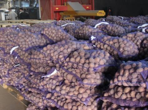 Картофель оптом от 8,50руб, фотография 1