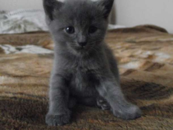 Котята ДАРОМ, фотография 1