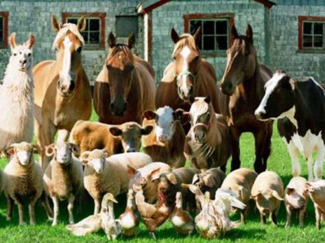 Куплю любой скот , фотография 1