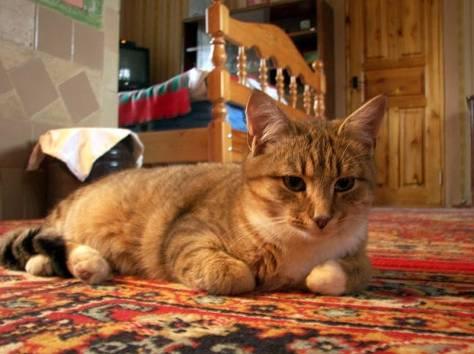 Куплю кота в ногинске