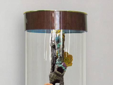 Уникальная красота, красивый аквариумный комплекс 90л, фотография 3