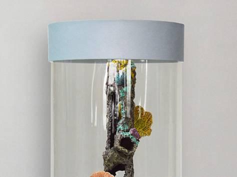 Уникальная красота, красивый аквариумный комплекс 90л, фотография 4