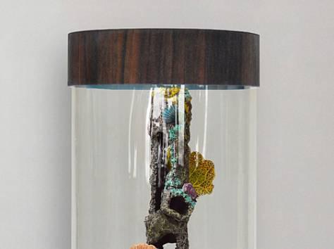 Уникальная красота, красивый аквариумный комплекс 90л, фотография 6