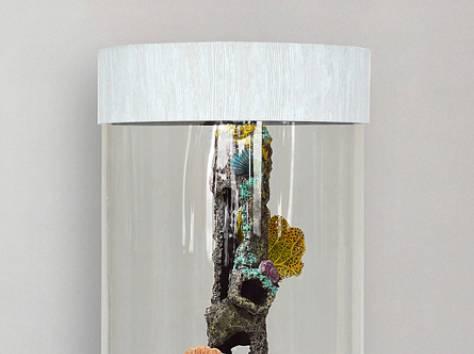 Уникальная красота, красивый аквариумный комплекс 90л, фотография 8