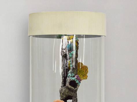 Уникальная красота, красивый аквариумный комплекс 90л, фотография 10