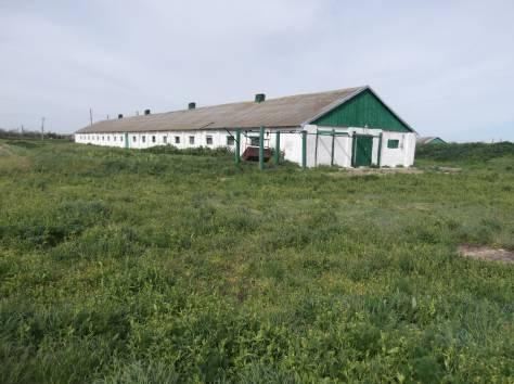 Ферма животноводческая, фотография 2
