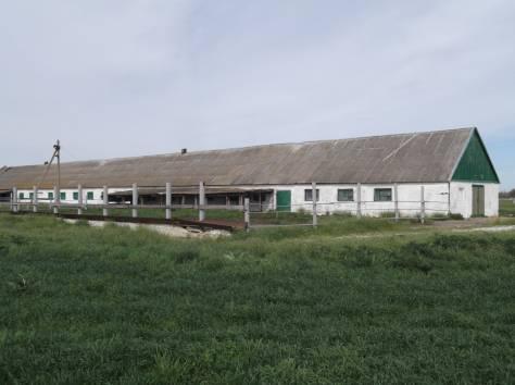 Ферма животноводческая, фотография 4