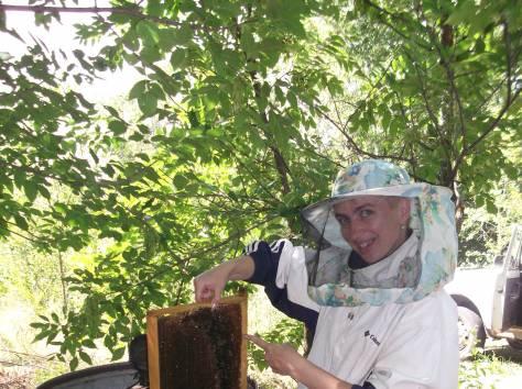 Продаю мед!, фотография 1