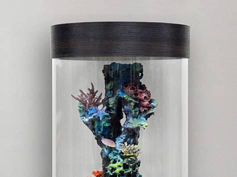 Уникальная красота - цилиндрический аквариум 130л, фотография 4