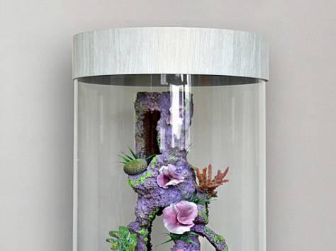 Уникальная красота - цилиндрический аквариум 130л, фотография 9