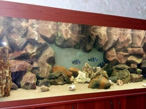 Декоративный задний фон для аквариума на заказ , фотография 2