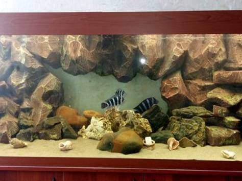 Декоративный задний фон для аквариума на заказ , фотография 3