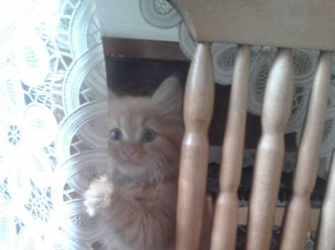 Купить кота в егорьевске
