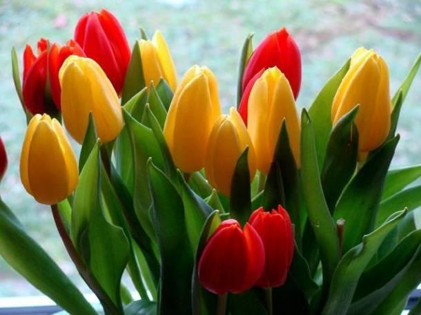 Тюльпаны оптом Долина роз 30 рублей, фотография 1