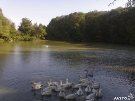 рыбалка в ставрополе на озере