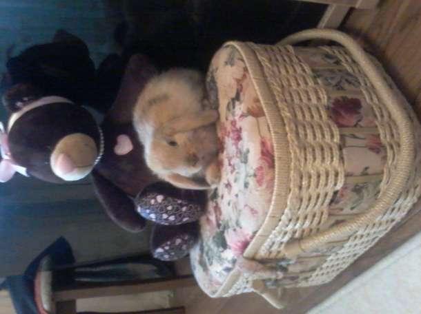 карликовый кролик, фотография 1